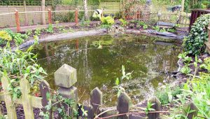 Communal Pond Site – Upgrade